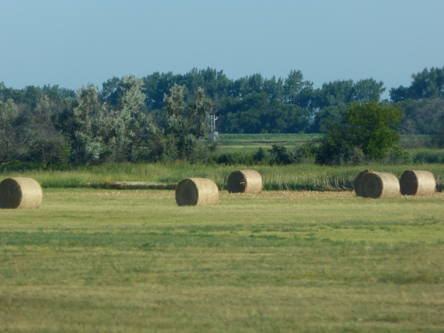 Making Hay in Saskatechewan