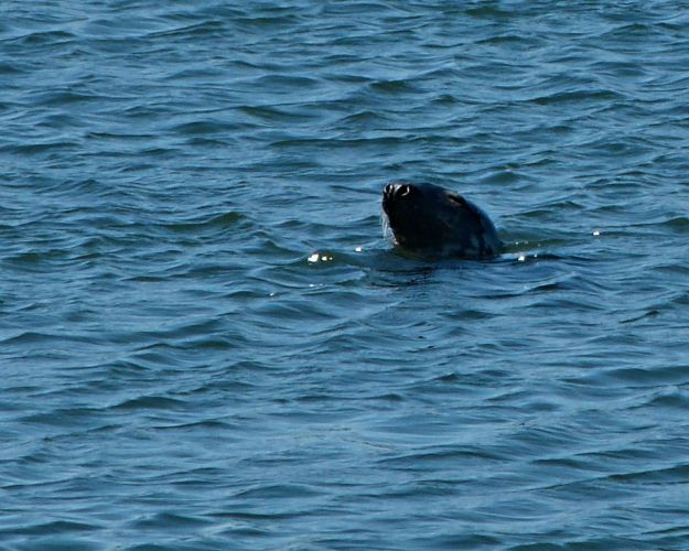 One of many seals around the lighthouse