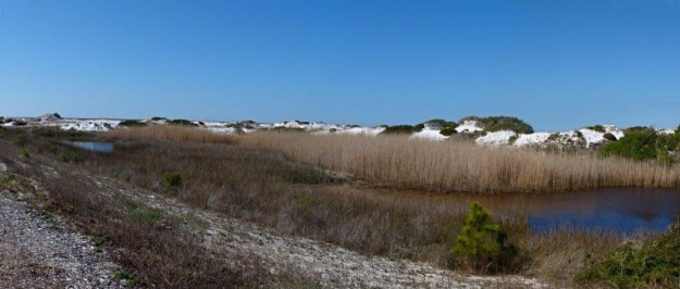 Sand dunes at a Grayton Beach